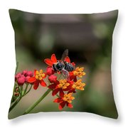 Visor Wearing Bee Pollinates A Colorful Flower Throw Pillow