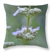 Vitex Cannabinifolia Throw Pillow