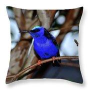 Vivid Blue Throw Pillow