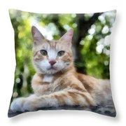 Volterra Italy Cat Watercolor Throw Pillow
