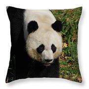 Waddling Giant Panda Bear In A Grass Field Throw Pillow