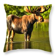 Wading For Breakfast Closeup Throw Pillow