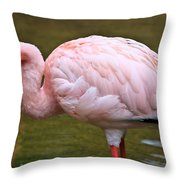Wading In Water Throw Pillow