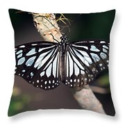 Waiting --- Rice Paper Butterfly Throw Pillow