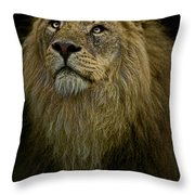 Waiting Expectantly Throw Pillow