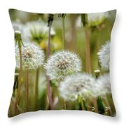 Waiting For A Spring Breeze Throw Pillow
