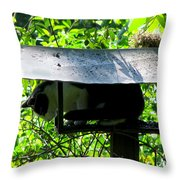 Waiting For Dinner Throw Pillow