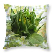 Waiting To Shine Throw Pillow