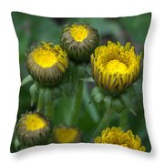 Wake Up Dandelions Throw Pillow