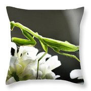 Walkin Tall On Silk Throw Pillow