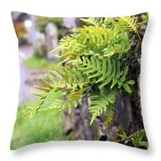Wall With Fern Throw Pillow