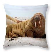 Walrus Family Throw Pillow