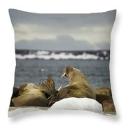 Walruses With Giant Tusks At Arctic Haul-out Throw Pillow