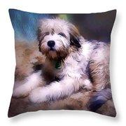 Want A Best Friend Throw Pillow by Kathy Tarochione