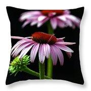 Warm Lavender Coneflower Throw Pillow