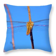Warming Wings Throw Pillow