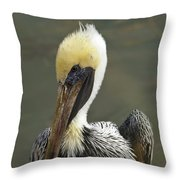 Wary Brown Pelican Throw Pillow