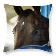 Wary Racehorse Throw Pillow