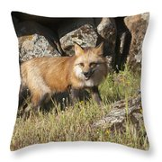 Wary Red Fox Throw Pillow