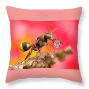 Wasp Blowig Bubble 160507e Throw Pillow
