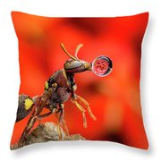 Wasp Blowing Bubble 160507c Throw Pillow