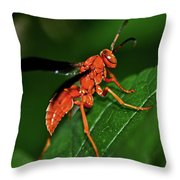 Wasp On A Leaf 001 Throw Pillow