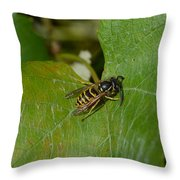 Wasp On A Sunny Day Throw Pillow