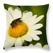 Wasp On Daisy Throw Pillow