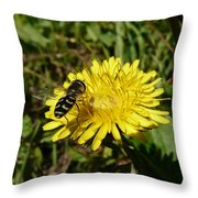 Wasp Visiting Dandelion Throw Pillow