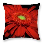 Watch Me Glow Throw Pillow