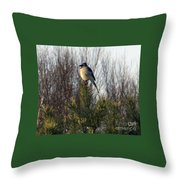 Watchful Blue Jay Throw Pillow by Kathy DesJardins