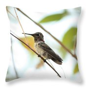 Watchful Hummingbird Throw Pillow