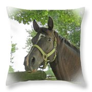 Watchful Mare Throw Pillow