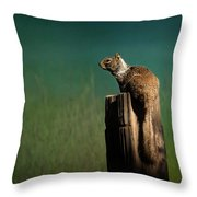 Watching Out- 365-66 Throw Pillow