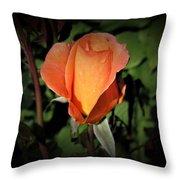 Water Beads On Orange Rose Throw Pillow