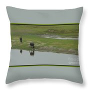 Water Buffaloe Throw Pillow
