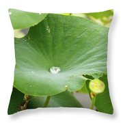 Water Droplet  Throw Pillow