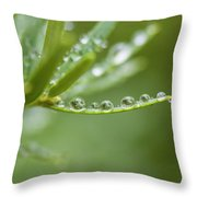 Water Droplets On Evergreen Throw Pillow