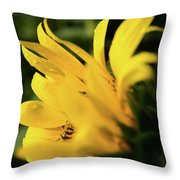 Water Drops And Sunflower Petals Throw Pillow by Dennis Dame