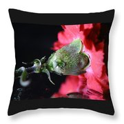 Water Drops On Carnation Throw Pillow