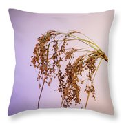 Drooping Teddy Bear Grass Throw Pillow