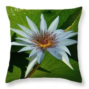 Water Lile Throw Pillow