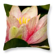 Water Lilly At Eye Level Throw Pillow