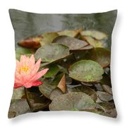 Water Lilly In Summer Throw Pillow