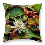 Water Lilly With Brown Pads Throw Pillow