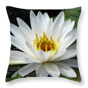 Water Lily 1 Throw Pillow