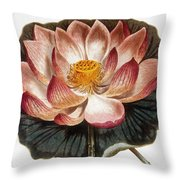 Water Lily, 1806 Throw Pillow