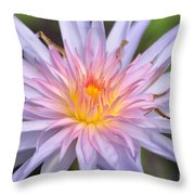 Water Lily  20 Throw Pillow