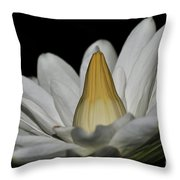water lily 25 White Night Blooming Water Lily I Throw Pillow