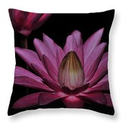 water lily 27 Dark Pink Night Blooming Water Lily Throw Pillow
